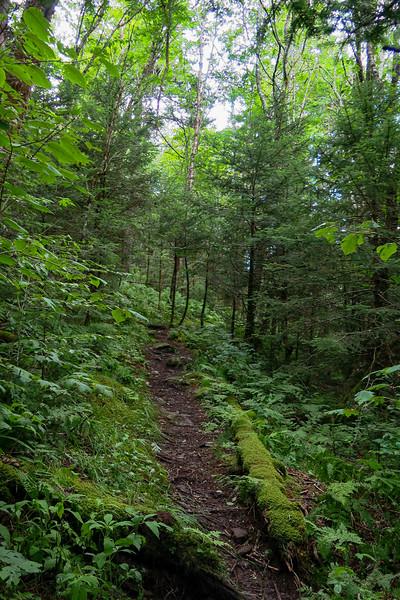 Mountains-to-Sea Trail - 5,350'
