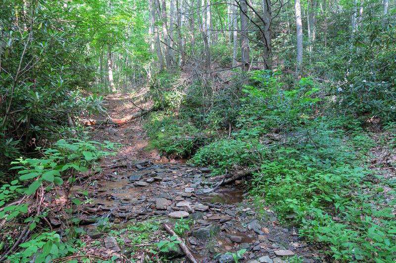 Woody Ridge Trail -- 3,400'