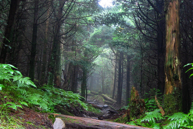 A misty tunnel of trees ahead was to be a common sight on this hike...