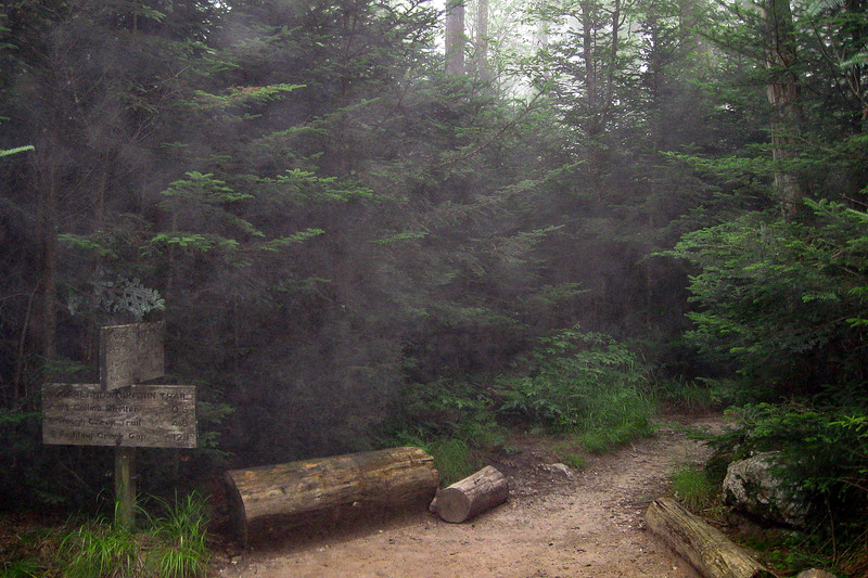 A ghostly fog surrounds me as I pass the Sugarlands Mountain Trail, only a few tenths of a mile from the trailhead...
