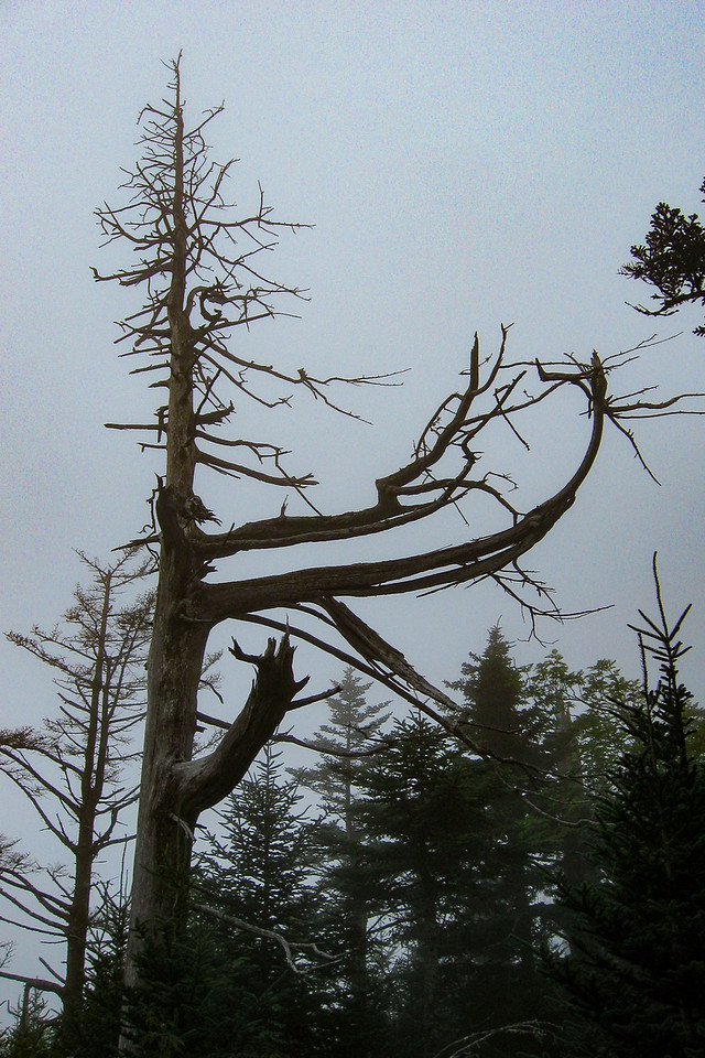 On high mountain ridges trees tend to take on a flag-type form due to persistent winds...it was cool to see this demonstrated on even some of the long deceased firs...