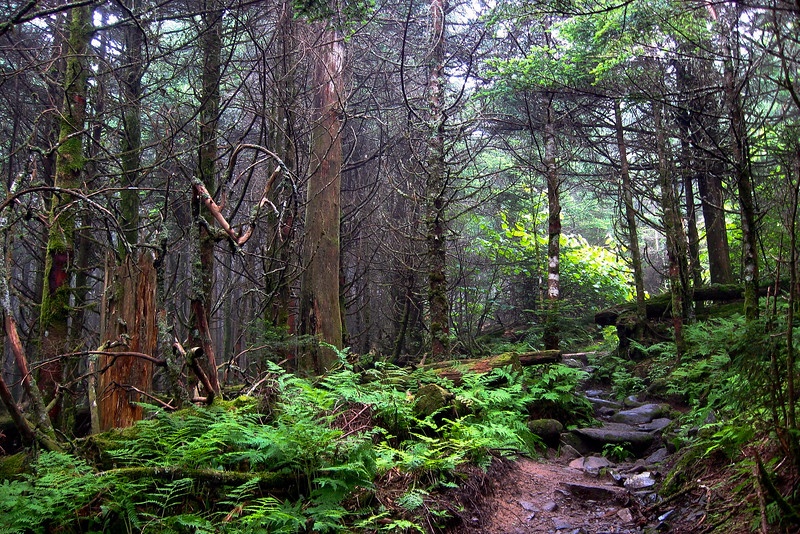 Past Mt. Love, and now above 6,400 feet, the forest under goes an abrupt transformation.  The spruce and fir don't just share the forest, they dominate it.  Also, you start to notice the canopy is decidedly lower and everything is covered in a thick matting of moss...