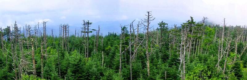 Clingman's Dome Summit - 6,643'