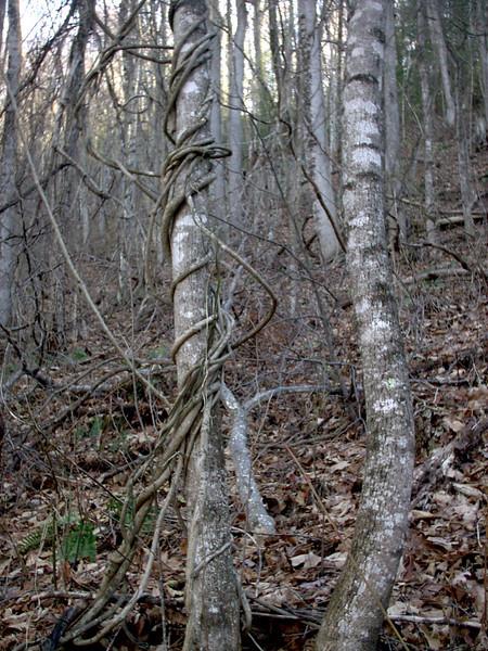 Art Loeb Trail - 3,540'