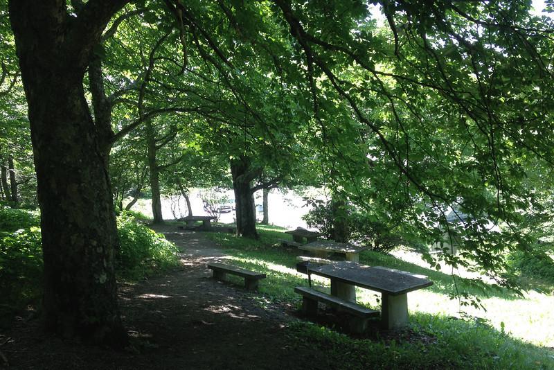 Craggy Gardens Picnic Area (5,220')
