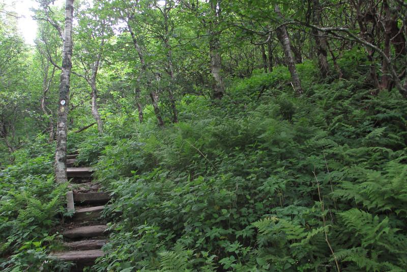 Mountains-to-Sea Trail (5,350')