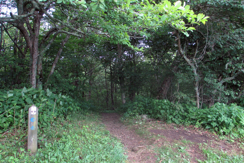 Craggy Gardens Picnic Area (5,200')