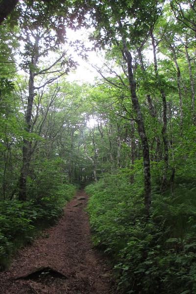 Mountains-to-Sea Trail (5,250')