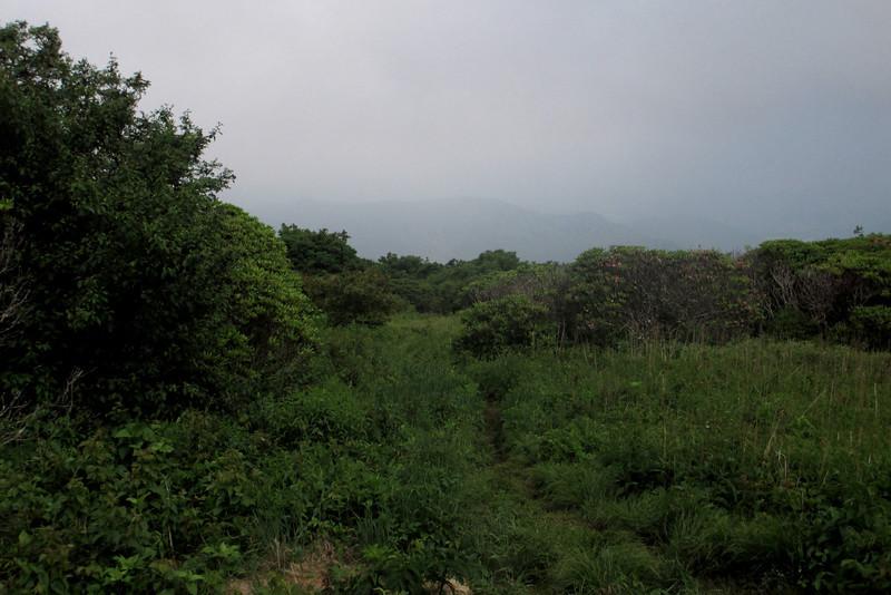 Craggy Gardens (5,600')