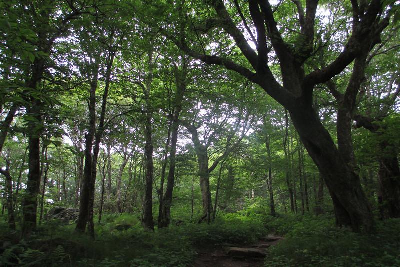 Mountains-to-Sea Trail (5,300')