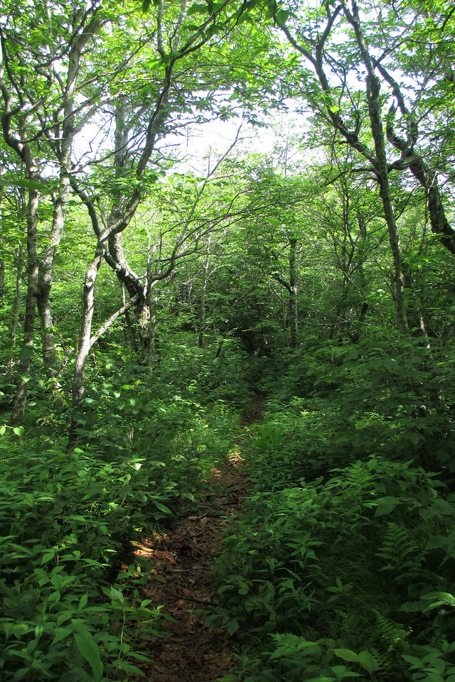 Mountains-to-Sea Trail (5,550')