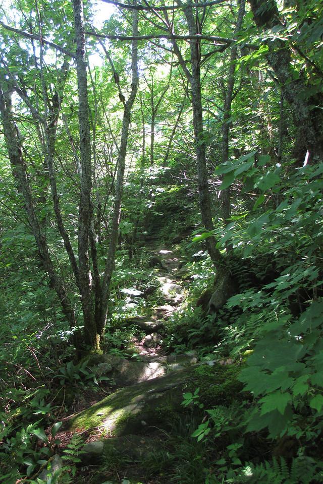 Mountains-to-Sea Trail (5,400')