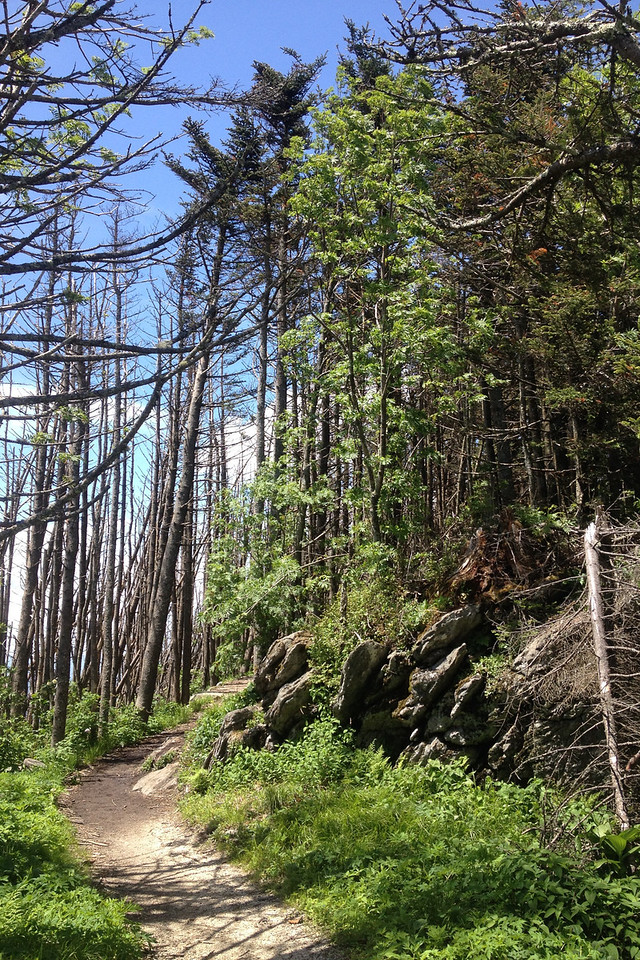 Deep Gap Trail (6,350')