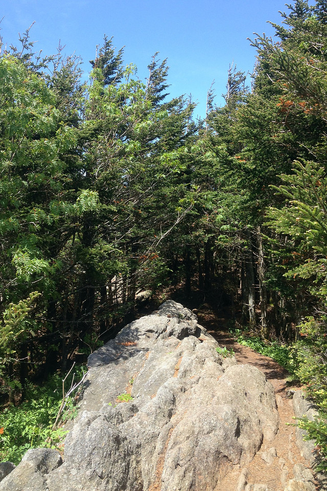 Deep Gap Trail (6,450')
