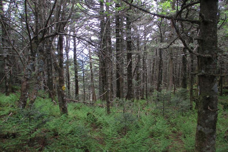 Mount Gibbes bushwhack (6,540')