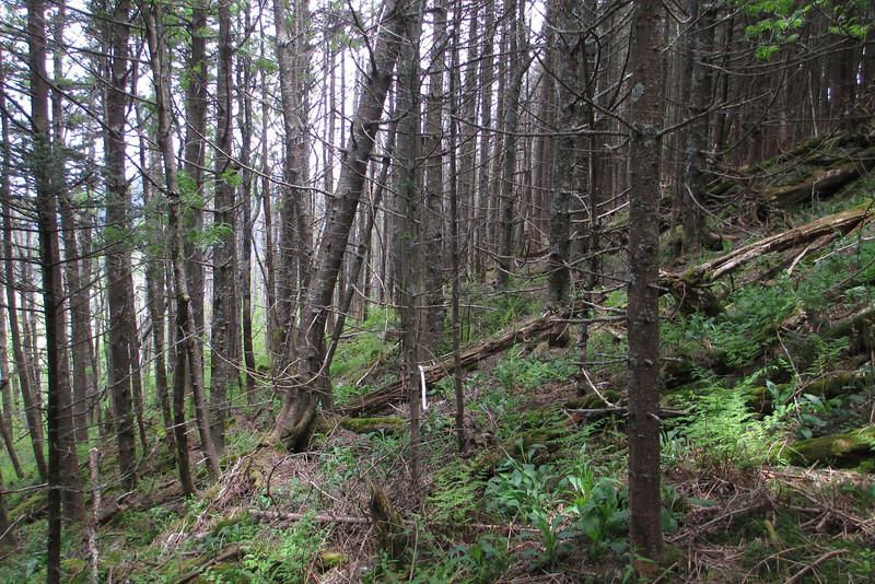 Mount Hallback bushwhack (6,350')