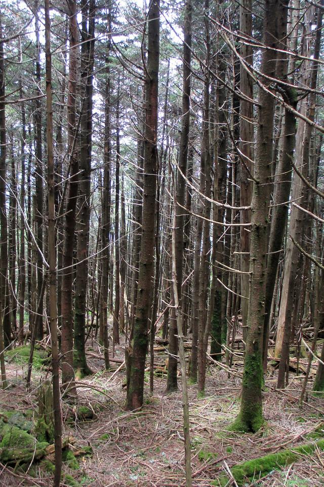 Mount Gibbes bushwhack (6,400')