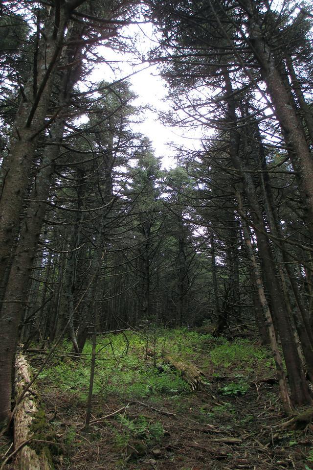 Mount Hallback bushwhack (6,300')