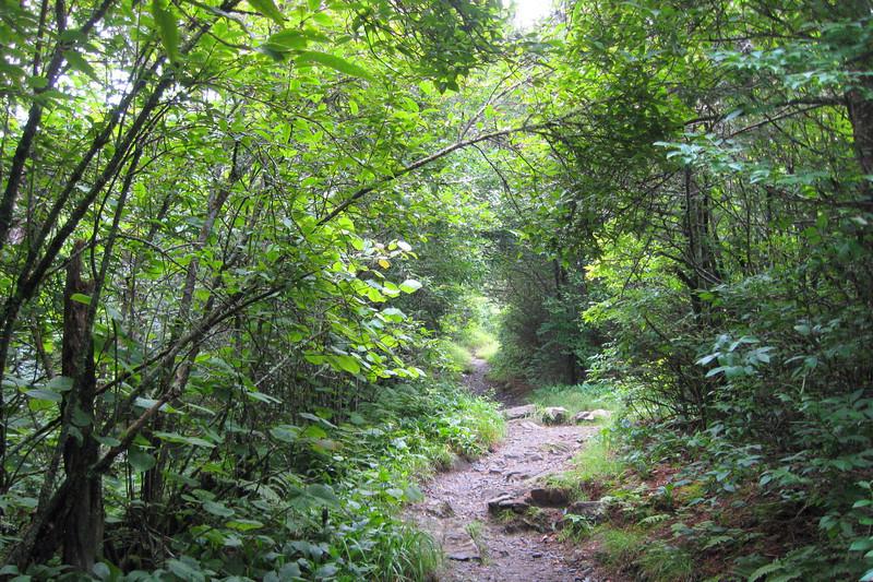 Appalachian Trail - 5,900'