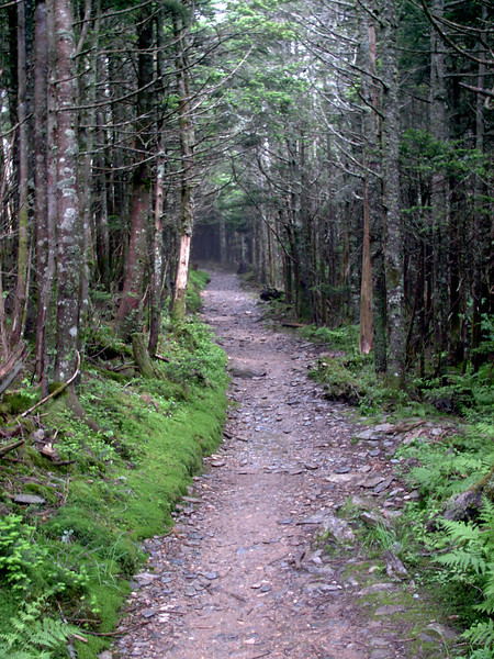 Alum Cave Trail - 6350'