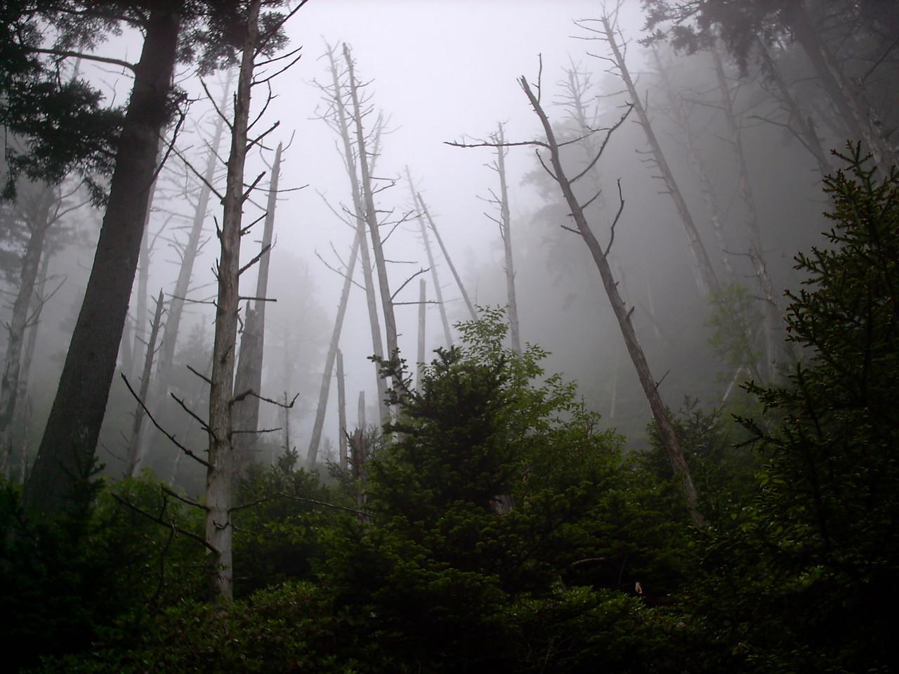 Alum Cave Trail - 6250'