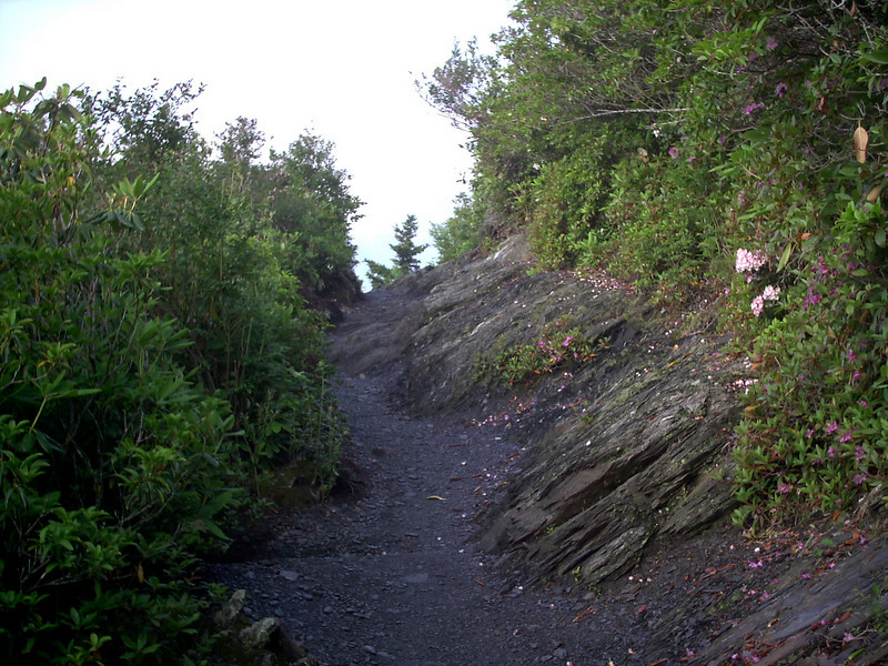 Alum Cave Trail - 5000'