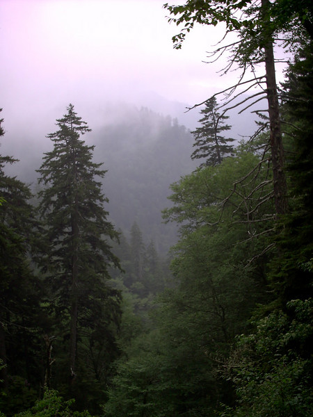 Alum Cave Trail - 5900'