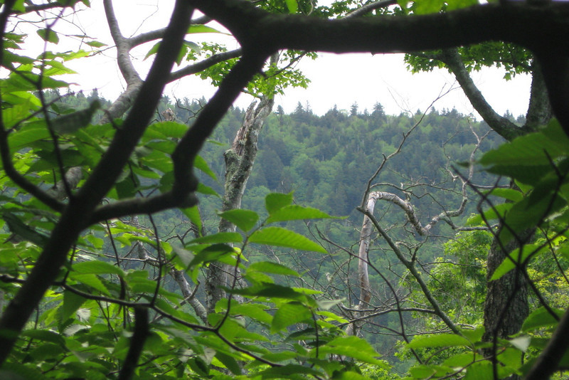 A glimpse back through the trees revealed the broad summit of Reinhart Knob, thankfully long behind me...
