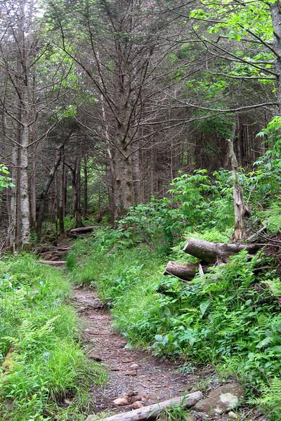 Richland Balsam Loop Trail