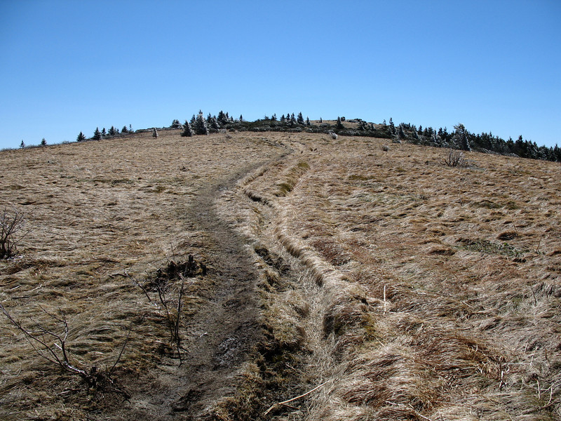 The long approach to the summit...can't figure out why they called this Grassy Ridge Bald, can you?;)