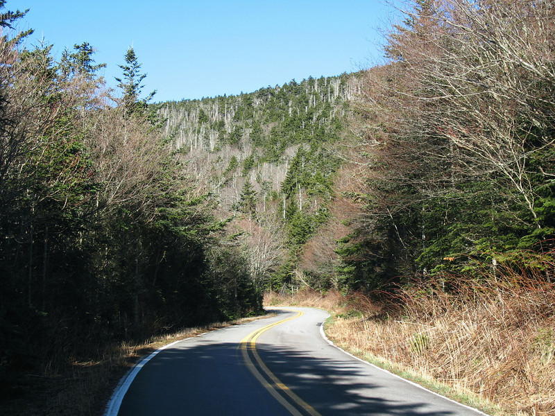 From Carvers Gap, I first headed up the access road which was closed for the season.