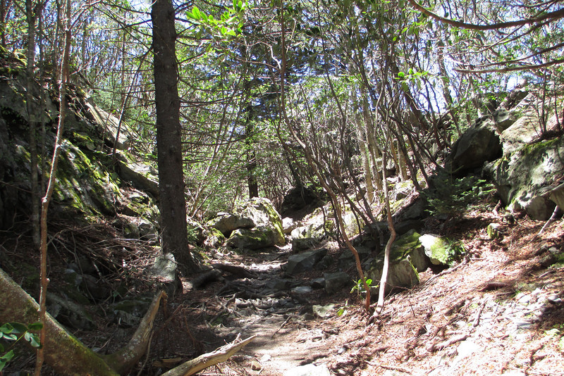 Little Sam Knob Trail