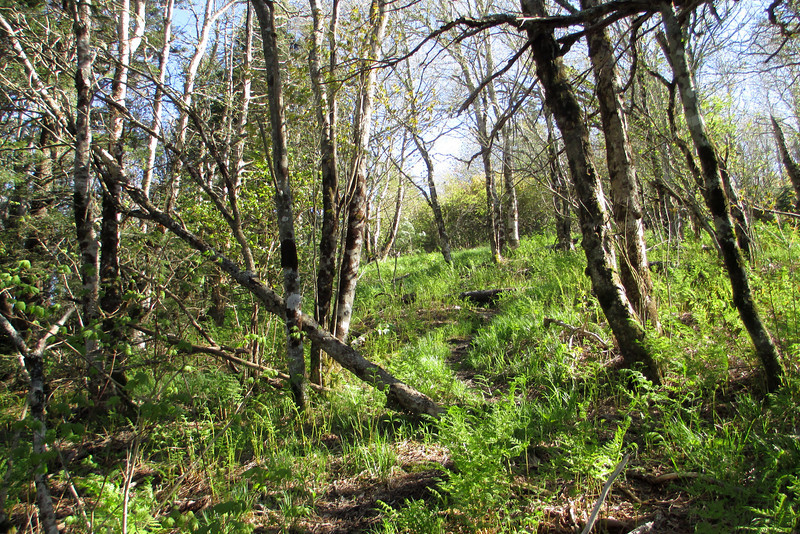 Mount Hardy Bushwhack