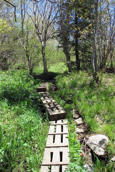 Sam Knob Trail - 5,580'