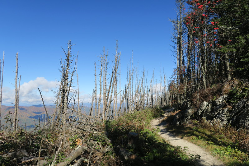 Black Mountain Crest Trail -- 6,380'