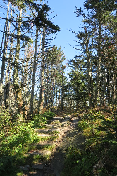 Black Mountain Crest Trail -- 6,340'