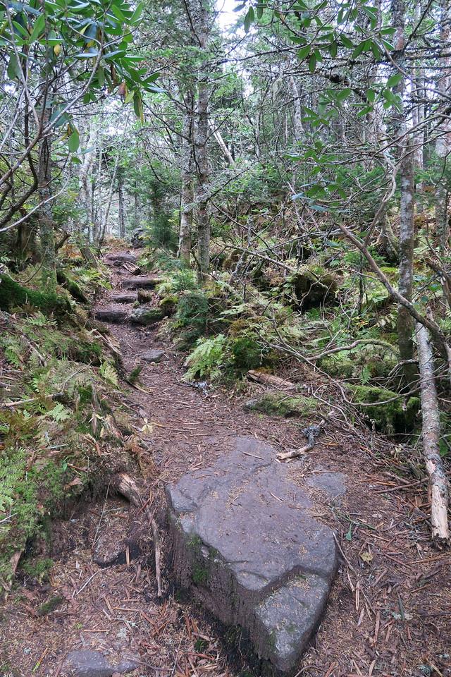 Black Mountain Crest Trail -- 6,540'