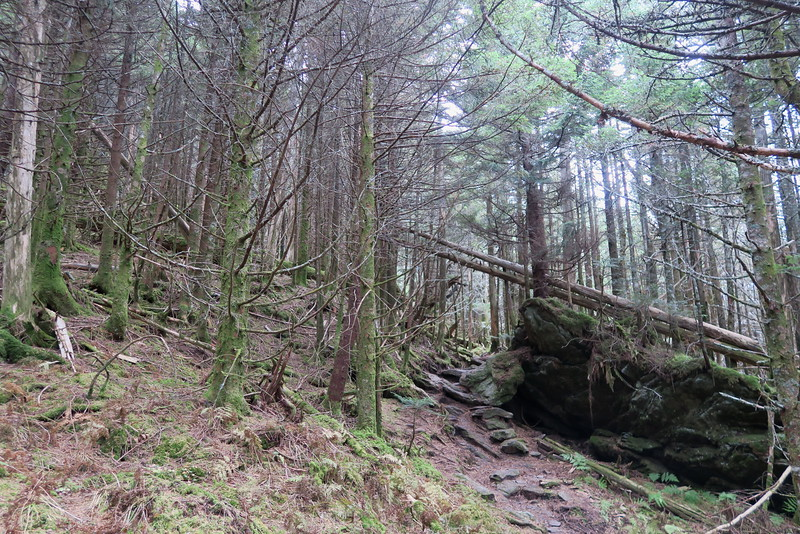 Black Mountain Crest Trail -- 6,550'