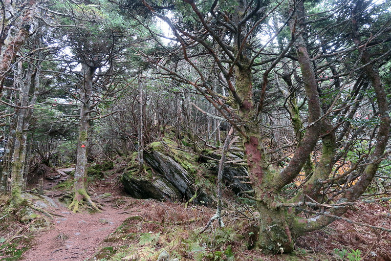 Black Mountain Crest Trail -- 6,430'