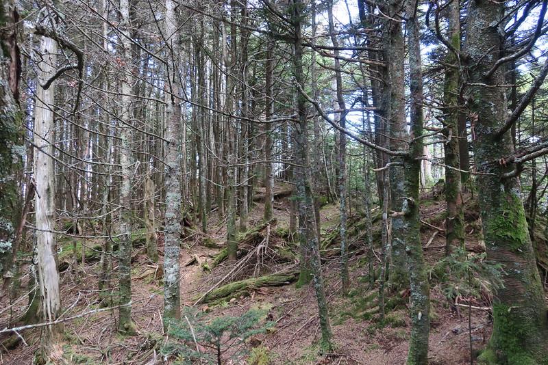 Cattail Peak Spur -- 6,600'