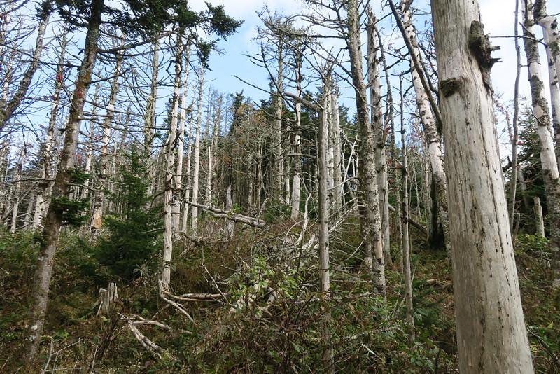 Cattail Peak Spur -- 6,550'