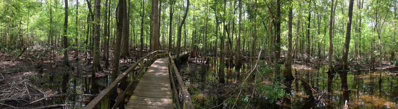 A panorama of the surrounding swamp near where we turned back...