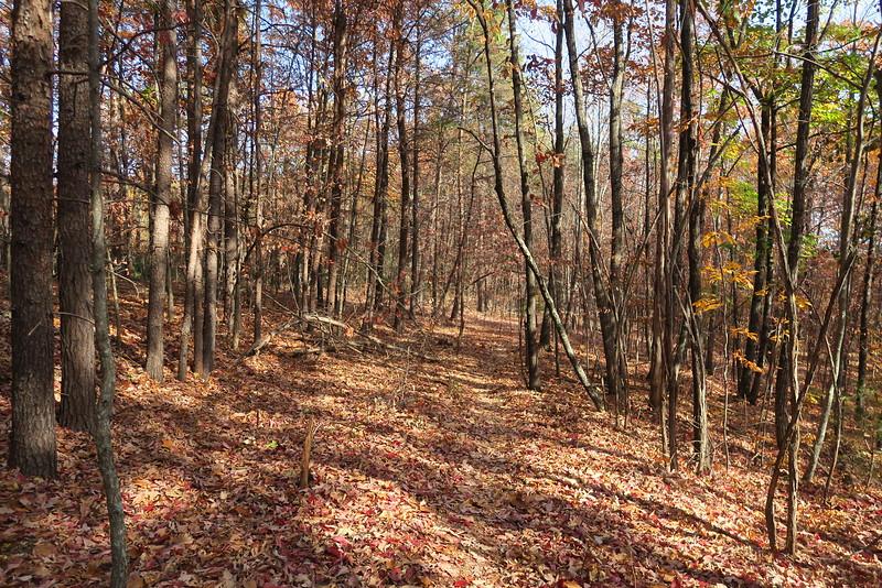 Big Rock Mountain Trail -- 1,550'