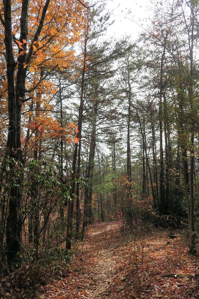 Big Rock Mountain Trail -- 1,450'
