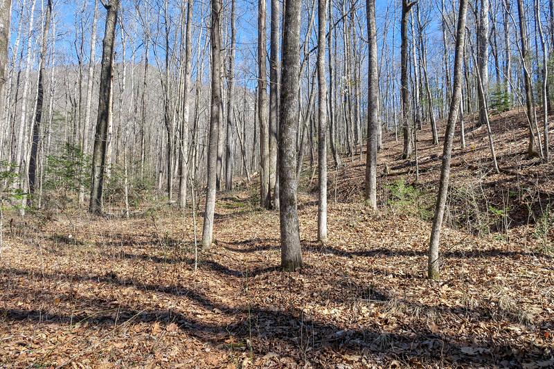 Naturaland Trust Trail -- 1,550'
