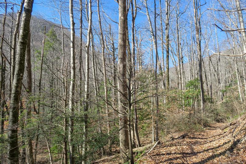 Naturaland Trust Trail -- 1,560'