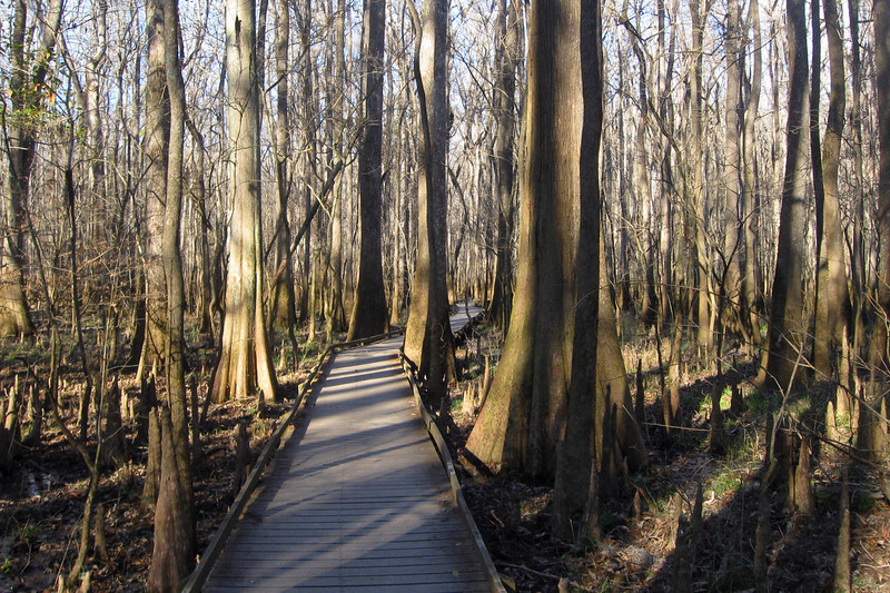 Congaree National Park (12-19-11)