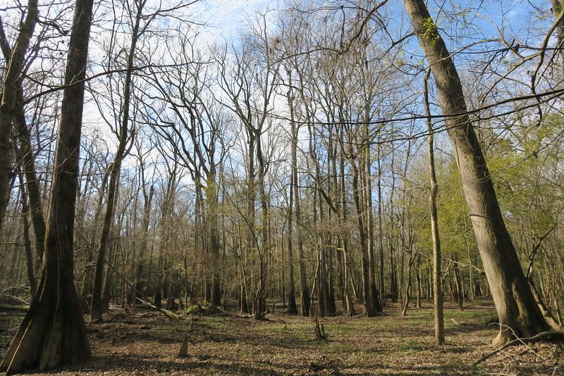 Oak Ridge Trail Detour