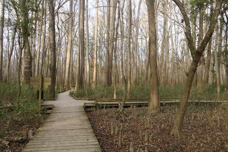 Weston Lake Loop-Boardwalk Loop Trail Junction
