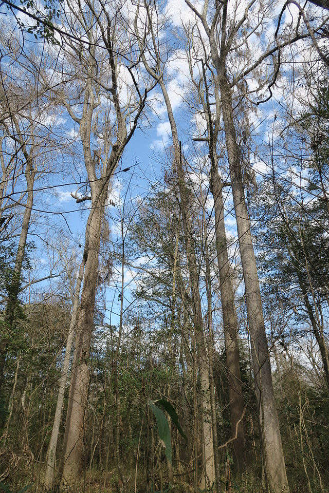 Oak Ridge Trail